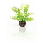 biOrb Caulerpa zelená 13 cm