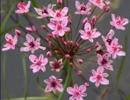 Rostliny mělké zóny