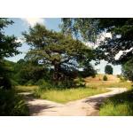 Trávníkové hnojivo - LÉTO
