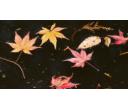 Údržba jezírka na podzim
