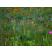 kvetoucí směsi
