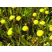 Rostliny do bahenní zóny (0 až - 30 cm)