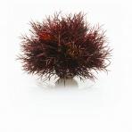 biOrb Sea Lilies karmínová 11cm