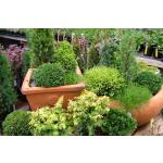 Hnojivo na okrasné keře, jehličnany, dřeviny, konifery