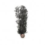 Biorb Sea Fan černá 29 cm