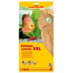 Catappa Leaves 10 ks XXL